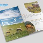 thiết kế brochure giá bao nhiêu 6