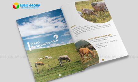 Thiết kế brochure giá bao nhiêu ?